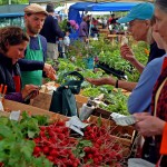 Find a local community farmers market
