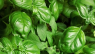 10 Herbs & Vegetables Perfect for Growing in a Shaded Garden